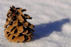 a79ec757b1d8bce9cd50f91430c1e557 300x200 - 2/2 雪ですが、絶賛営業中です!