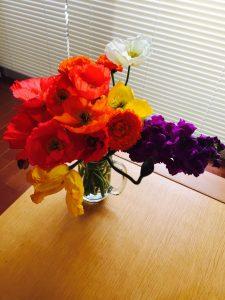 image 16 225x300 - 千葉・南房総へ。いちご狩り&お花摘み♪