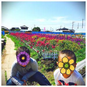 image 19 300x300 - 千葉・南房総へ。いちご狩り&お花摘み♪