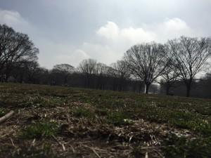yoyogi park 300x225 - ジョギング・代々木公園にて