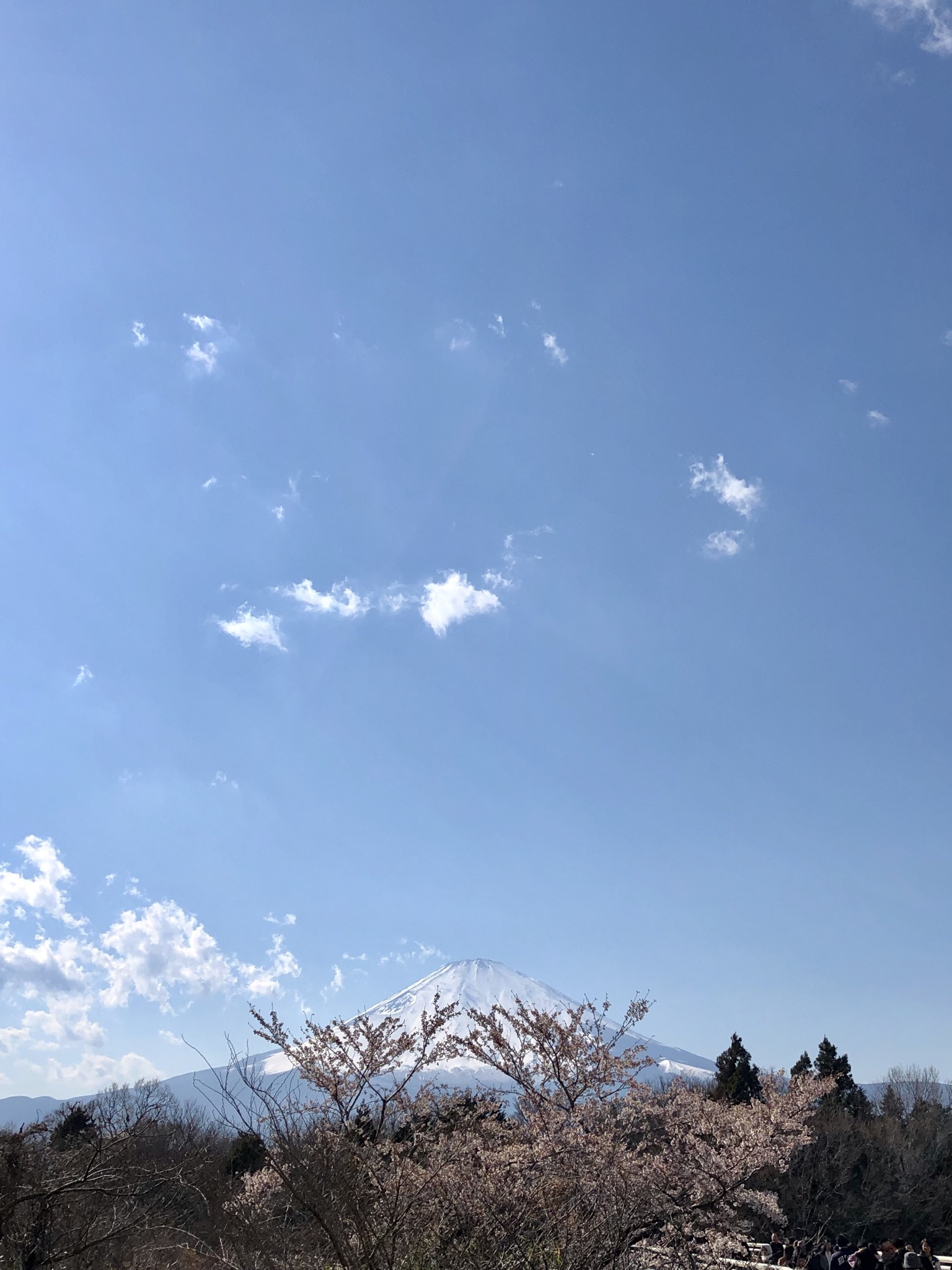 862D6517 21E2 4654 8AE6 91BEB972A8AA - 富士山と桜