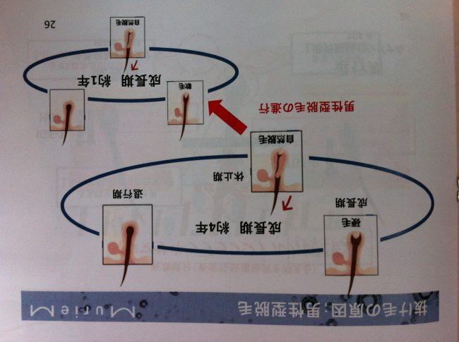 IMG 1205 - 美容院で出来る育毛メニュー(Dr.スカルプ) ~毛周期編~