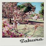 IMG 2337 150x150 - 富士山と桜