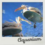 IMG 2681 150x150 - サンシャイン水族館