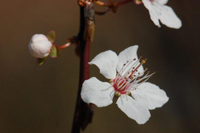 spring 1191638 1280 - ☆桜の開花☆